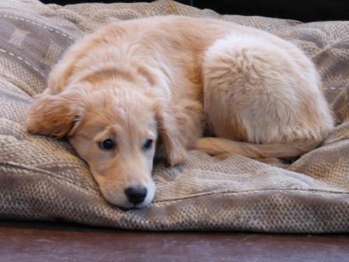 Whisper puppy